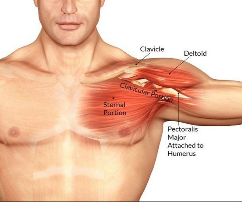 Smerter I Venstre Bryst Og Armhule