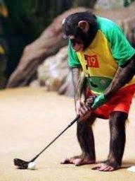 Golferen