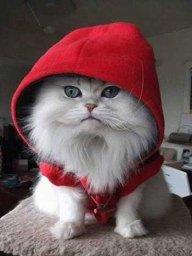 Katten Sin Vei